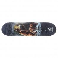 Дека для скейтборда для скейтборда Element Bear Logo 31.375 x 7.625 (19.4 см)